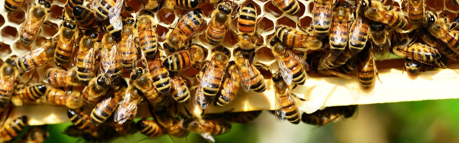 méhészet, méhészet Pécs, méhész, méhész Pécs, méz, méz Pécs, méz termelés, méz termelés Pécs